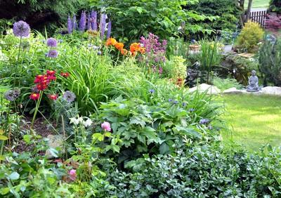Garten Blumen Bodendecker