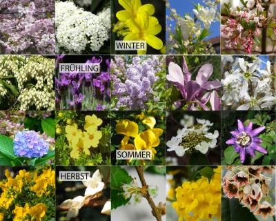 Blühende Sträucher über das ganze Jahr