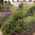 Kräuter im Duftgarten