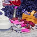 Lavendel im Duftgarten