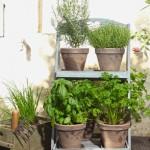 Duftgarten auf verschiedenen Ebenen