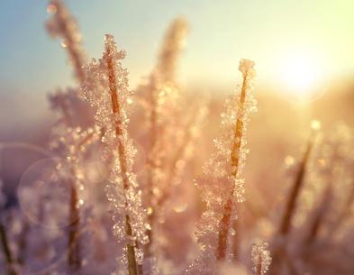 Ziergräser im Herbst und Winter