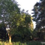 Vorher-Foto 1 vom großer, mediterranen Garten