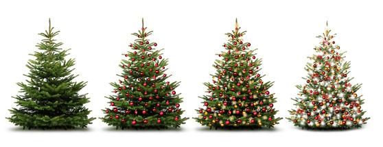 Entwicklung Nadelbaum zum Weihnachtsbaum