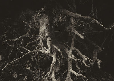 Wurzeln und ihre Wurzelsysteme