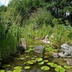 Gartenteich mit Algenteppich und Seerosen