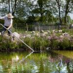 Reinigung des Gartenteiches