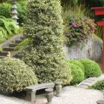 japanischer Garten mit Stechpalme als Formschnittgehoelz und Steinbank