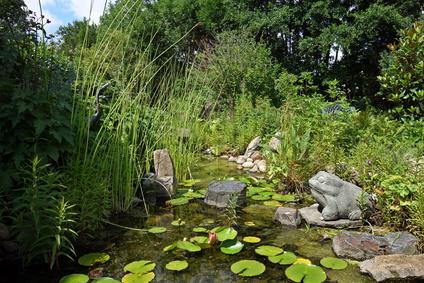 Randbereich Teich mit Pflanzen