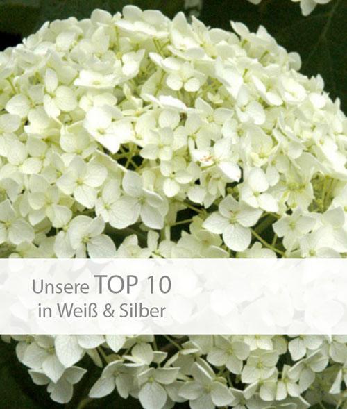 Einstieg TOP 10 weiß-silber