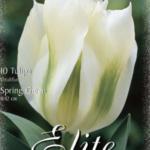 Tulpe 'Spring Green'
