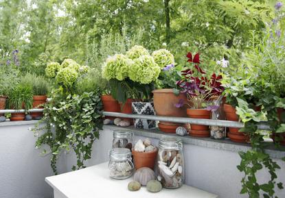 Balkon-Balustrade eingefasst von vielen bepflanzten Kübelpflanzen