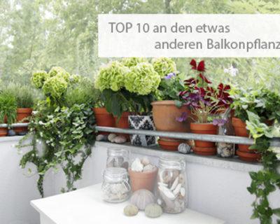 TOP 10 besonderer Balkonpflanzen
