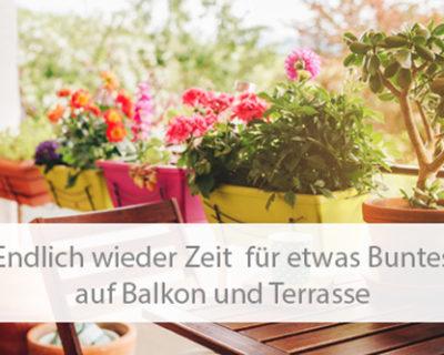 Einstiegsbild Balkon- und Kübelpflanzen für Balkon und Terrasse