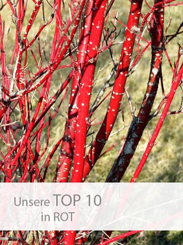 Einstieg-TOP-10-Rot
