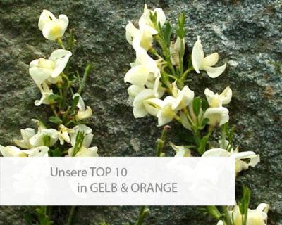 Einstiegsbild Top 10 in Gelb und Orange
