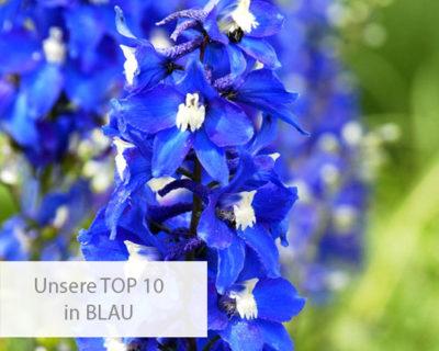 Einstiegsbild für die TOP 10 in der blauen Farbfamilie
