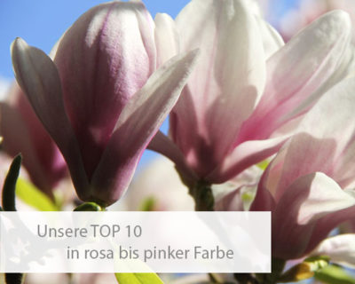 Einstiegsbild TOP 10 in rosa & pink