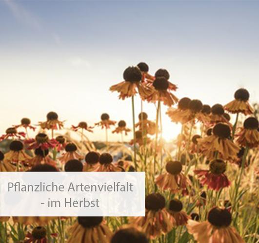 Einstieg pflanzliche Artenvielfalt im Herbst