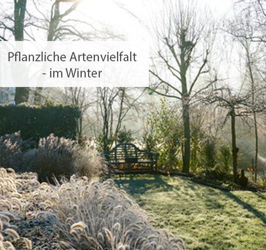 Einstieg pflanzliche Artenvielfalt im Winter