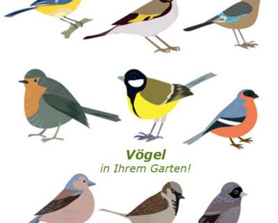 Einstiegsbild Vögel in Ihrem Garten