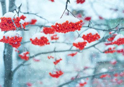 Farbenspiel im winterlichen Garten