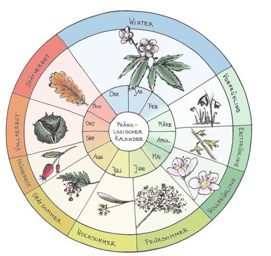 Darstellung phänolgischer Kalender