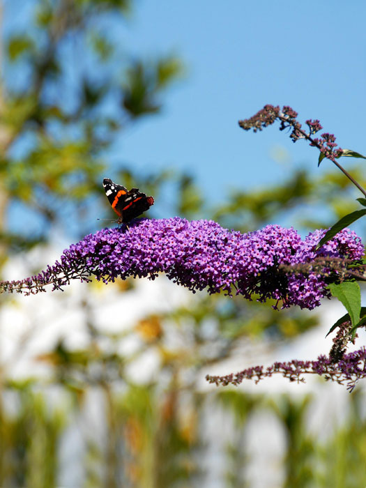 Einstieg Schmetterlinge im Garten