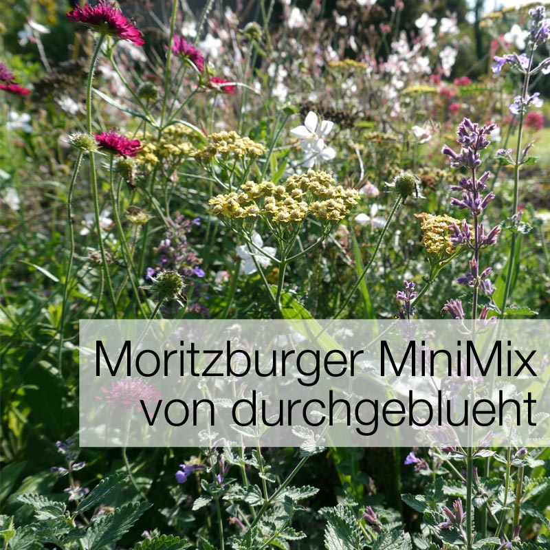 Einstieg zum Thema Moritzburger MiniMix