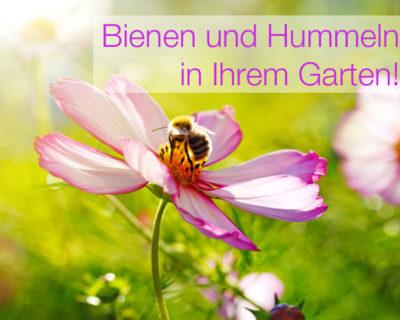 Einstieg Bienen und Hummeln