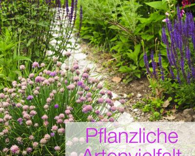 Einstieg TOP 10 Sommerpflanzen