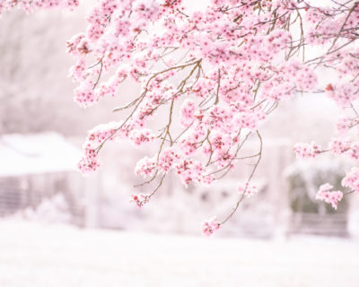 Startbild winterblühende Sträucher