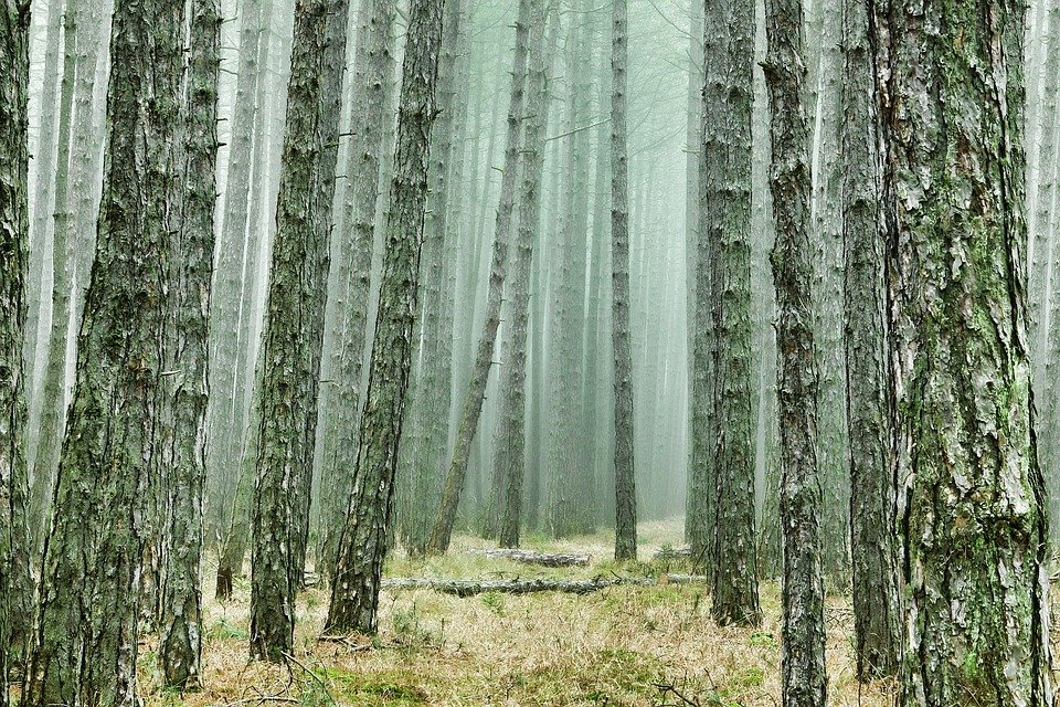 Einstiegsbild Kiefernwald